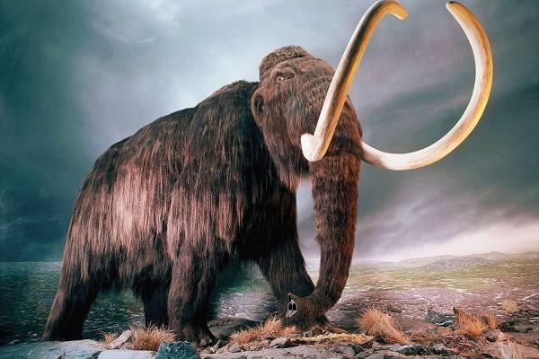 mamut geri dönüyor