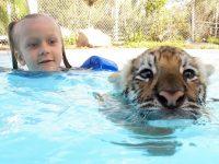 çocukların hayvan sevgisi